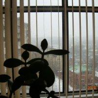 Ненастная погода :: татьяна