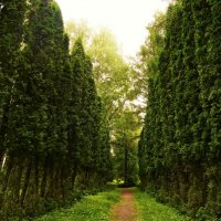 Утренняя прогулка по дендрарию :: Светик Семицветик