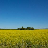 Сине-желтое безмолвие :: Роман Царев