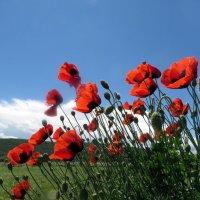 Магический цветок-загадка :: Наталья Джикидзе (Берёзина)