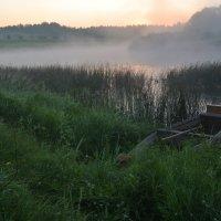 Лето. Утренний туман. :: IRINA VERSHININA