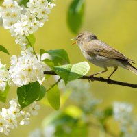 Вечная весна :: Влад