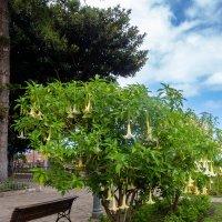 Цветы на деревьях, Тенерифа :: Witalij Loewin