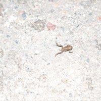 Лягушка в прыжке :: Наталья Крылова