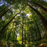Лесной шатёр :: Игорь Герман