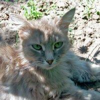 Жарко гостье-в тень легла под куст! :: Наталья