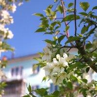 Весна :: Мария Паздникова