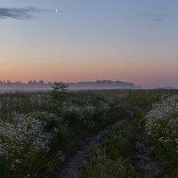 Сон ромашек в летнюю ночь... :: Roman Lunin