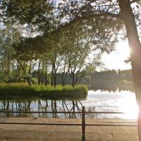 вечер в летнем парке :: Елена
