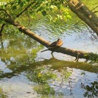 Птичка на дереве :: Нина Бутко