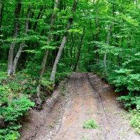 Дороги в лесу :: Виктор Шандыбин
