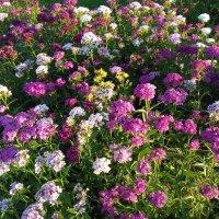 В моём саду :: Mariya laimite