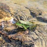 Царевна лягушка :: Лилия Масло