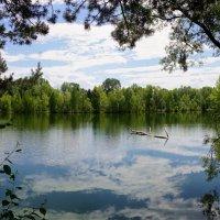 Пруд в лесу :: Наталия Григорьева
