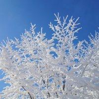 Зимний день :: MPS