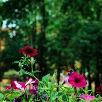 Цветы :: Николай П