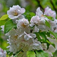 Весна в аптекарском огороде :: Владимир Брагилевский