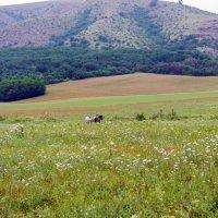 Долина Кизил-Коба в предгорье Долгоруковской гряды Крымских гор :: Варвара