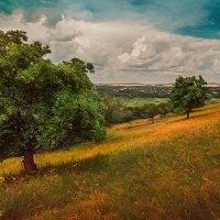 Деревья на теплом ковре :: Сергей Урюпин