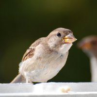 угостите пожалуйста! :: linnud
