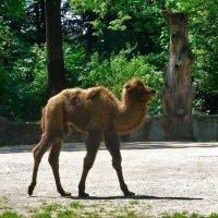 """Верблюжонок: """"Фотосессия? Ха! У меня есть дела поважнее!"""" :) :: Nina Yudicheva"""