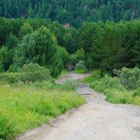 дорога в бор :: Alexandr Staroverov