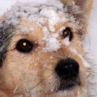 Зимний пес :: Елена Даньшина