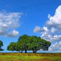 Вздыхает небо облаками... :: Лесо-Вед (Баранов)