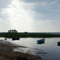 На берегу Финского залива :: Елена Смолова