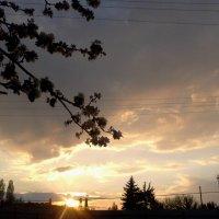 весенний рассвет :: Галина