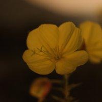 Ночной цветок. :: АНДРЕЙ ШЕВЧЕНКО