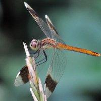 Из жизни насекомых :: Vladimir Lisunov