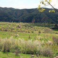 Земля Армении 3 :: Лидия кутузова