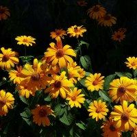 Цветы жаркого лета :: Владимир Бровко