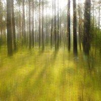 Сказочный лес :: Evgenij Schleinikov