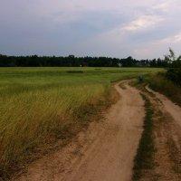 пшеница :: елена