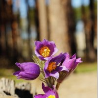Вспоминая весну в ожидании новой :: Лидия (naum.lidiya)