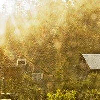 Грибной дождь :: Тамара Рылова