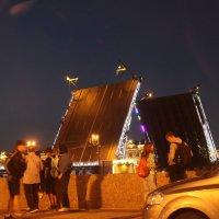 Дворцовый мост в июле 2016 :: Наталья