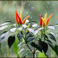 А за окном 3 день идет дождь... :: Сергей Гончаров