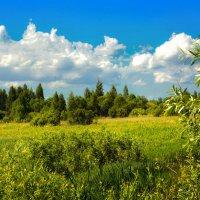 Лес, поляна... :: Юрий