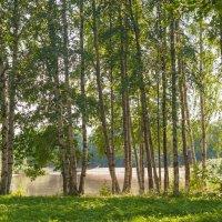 На берегу пруда :: Виталий