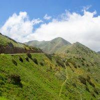 По дороге в высогорное селение Маска, Тенерифа :: Witalij Loewin