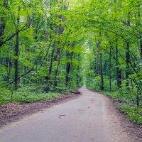 Дорога в лесу.. :: Юрий Стародубцев