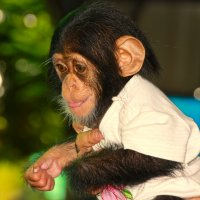 Малышка шимпанзе. :: Лариса Борисова