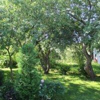 Яблоневый сад :: Агриппина