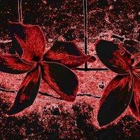 Цветы плюмерии :: Герович Лилия