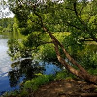 Летом на берегу пруда... :: Ольга Русанова (olg-rusanowa2010)