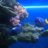 В аквариуме :: Евгений