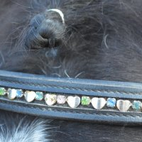 Лошадь :: Ксения Валерьевна